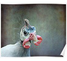 A Bird a Chicken a hmmmm.... Poster