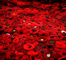 Thousands Of Poppies by ScarlettImages
