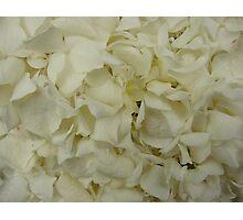 White Hydrangea-(Floral Macro) Photographic Print