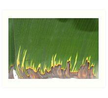 burning leaf Art Print