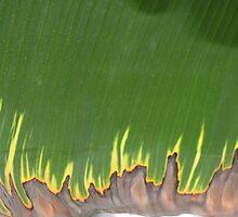 burning leaf by yvesrossetti