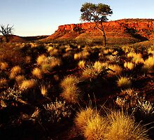 A walk through the spinifex- Kings Canyon by pcphotoart