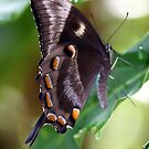 Butterfly Life by Kelly Robinson