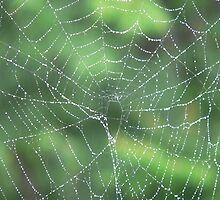 Web of Dew by melodyart