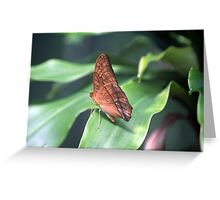 The Cruiser Butterfly Greeting Card