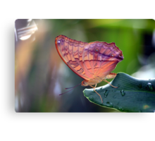 One Lovely Cruiser Butterfly Canvas Print