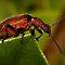 Beetle Beauties