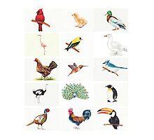 Birds by JenniferCortois