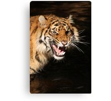 Tiger: Annoyance Canvas Print