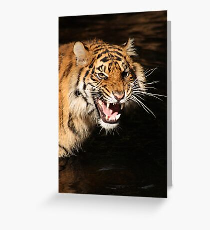 Tiger: Annoyance Greeting Card
