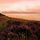 Heather Evening, Bute by artyfifi