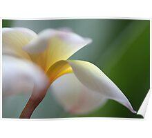 windy flower Poster