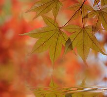 Reflect on Autumn by Jacky Parker