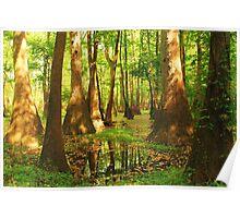 Summer Swamp Poster