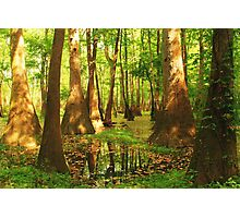 Summer Swamp Photographic Print