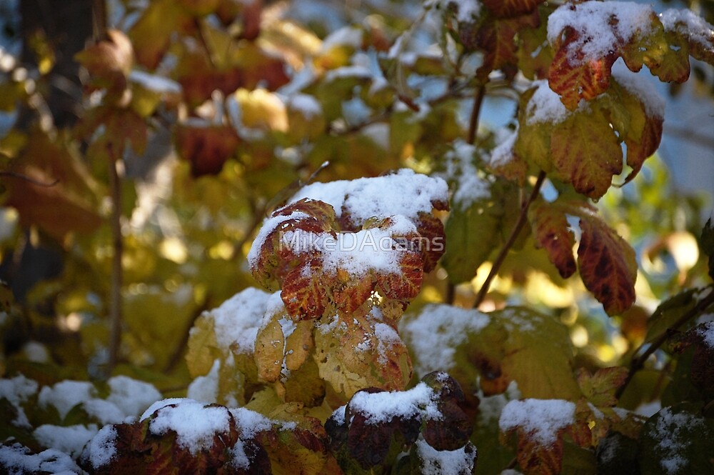Leaves Snow by MikeDAdams