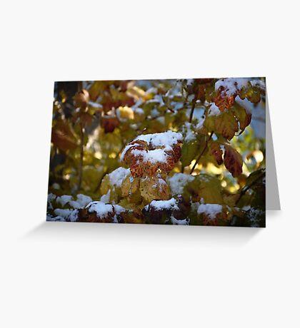 Leaves Snow Greeting Card
