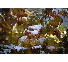 Leaves Snow Photographic Print