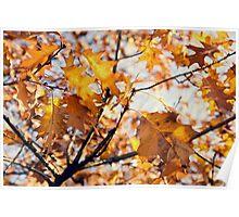 Last Autumn Breath  Poster