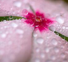 Pink impatiens in the rain by mimialanjo