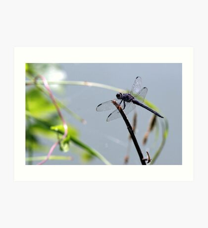 Dragonfly Searching For Food Art Print
