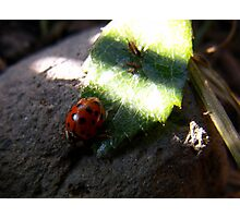 Lady Bug ~ I'm Outta Here Photographic Print