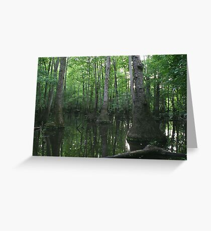 Tupelo Swamp Greeting Card