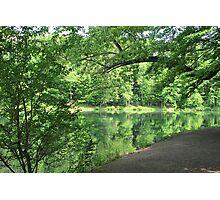 Spring Greens Photographic Print