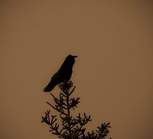 The Raven Waits  by peaceofthenorth