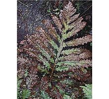 Rusted Fern Photographic Print