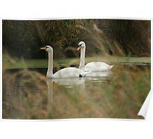 on barton pond Poster