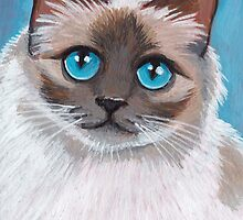 Topaz: Blue Eyed Ragdoll Cat by Lisa Marie Robinson