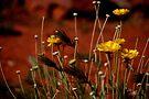 Wild Daisy by LudaNayvelt
