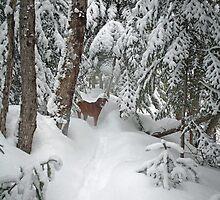 Winter Beauty by Gisele Bedard