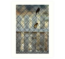 Birds in the fence Art Print