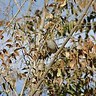 Camouflage  seek and find the Bird by David  Postgate