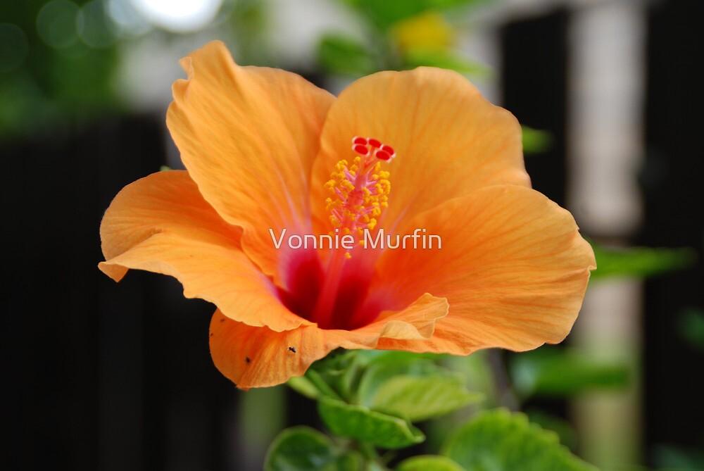 Orange Flower by Vonnie Murfin