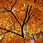 Golden Canopy by tanmari