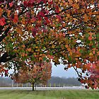Autumn Tree-scape by mltrue
