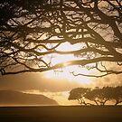 Magic Tree 1 by Lesley Ortiz