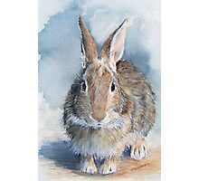 Hare's Lookin' at You Kid! Photographic Print