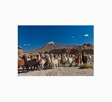 Llama (Lama glama) in Andes landscape Unisex T-Shirt