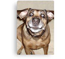 Funny Mattie 3 Canvas Print