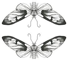 Moth Art Print by zealdesign