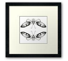 Moth Art Print Framed Print