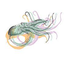 Octopus Art Print Photographic Print
