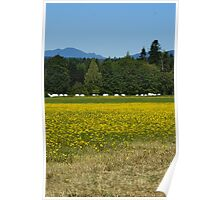 fields of yellow Poster