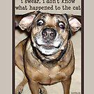 Funny Mattie 3.1 by Samitha Hess Edwards