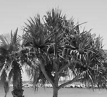Iluka Bay-(Pandanas View)-B&W by Martice