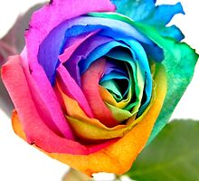 Rainbow Rose 01 by VMDolphin